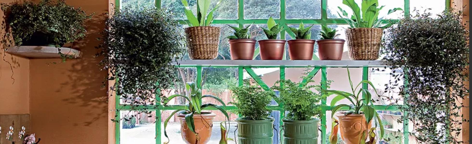 capa-decor-planta